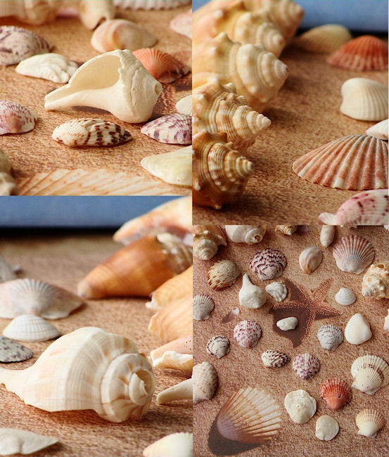 Sanibel shell collections