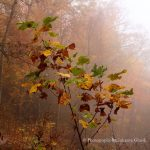Fall in the dreamy Smoky mountains