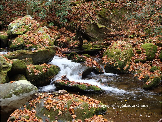 roaring fork smoky mountain